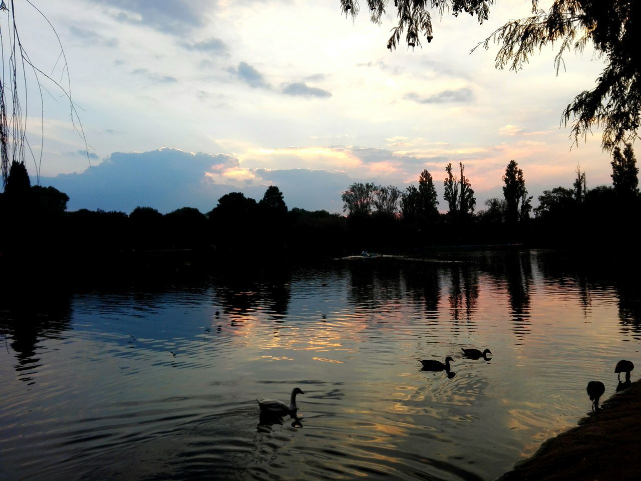 Zoo Lake Johannesburg Jozi Sunset look at that! Skyporn The Great Outdoors - 2017 EyeEm Awards