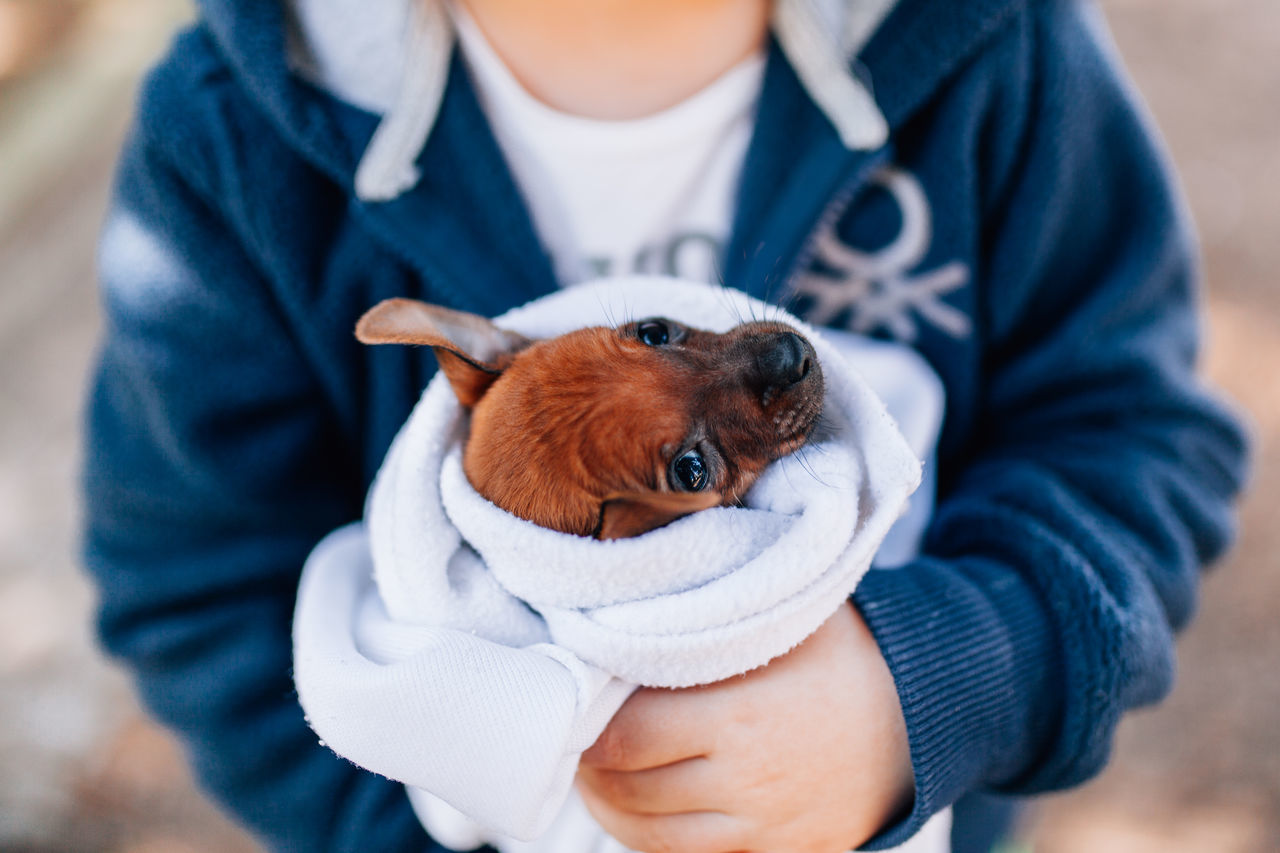 Beautiful stock photos of puppy,  Animal Themes,  Blanket,  Blue,  Boys