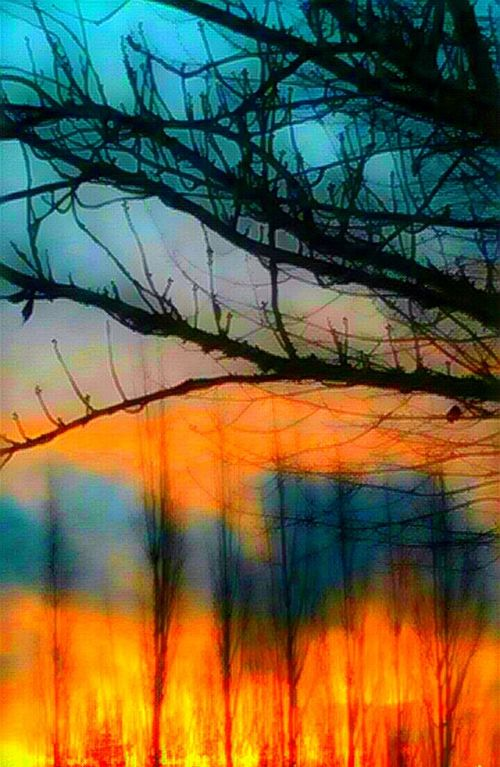 Sunrise_Collection Multi Colored Tranquility Bare Tree Scenics Outdoors The Week On EyeEem Always Be Cozy Textured  Beauty In Nature Vibrant Color Sunrise Colors Sunrise And Clouds For The Love Of Art Artistic Perception Freshness My Year My View Bright_and_bold Cellphone Photography I Love Photograpy Getty Images Fragility Idyllic Sunrise Silhouette Original Photography