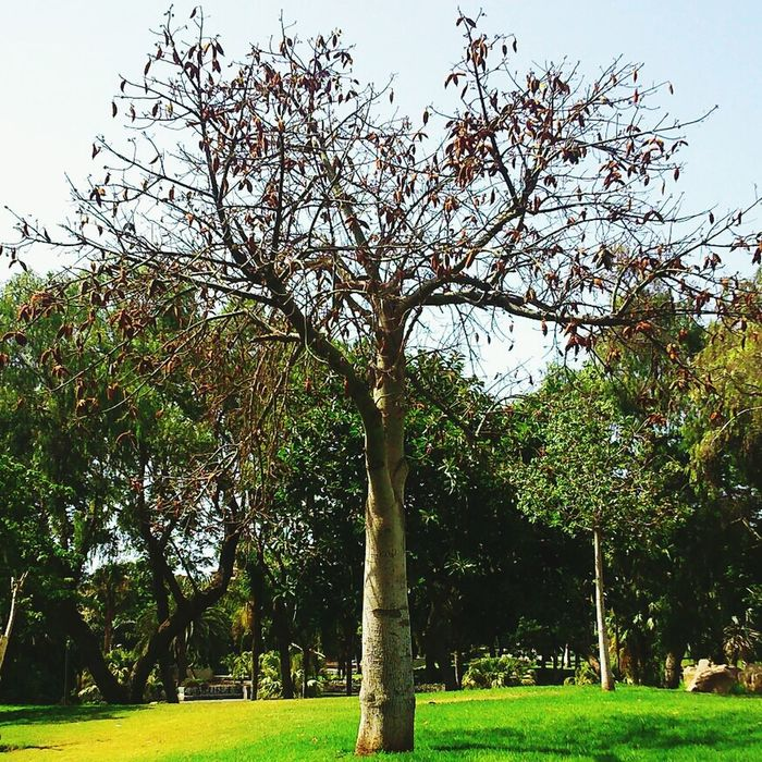 Alone. Tree Park Photooftheday Nature Collection