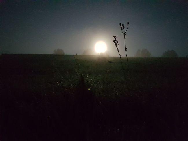 Nightshot Nightphotography Night Full Moon Full Moon Night  Green Grass Hill Trees Background