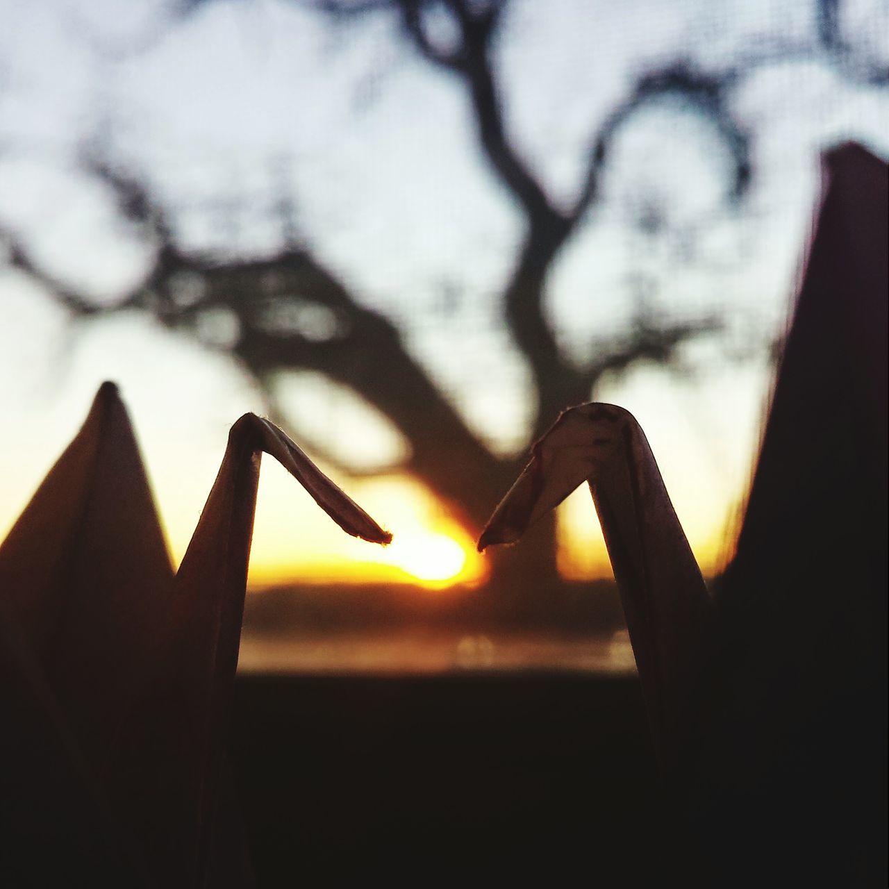 Origami Cranes Origami Sunset Sunset Silhouettes Closeup Closeupshot Macro Silhouette Love Birds