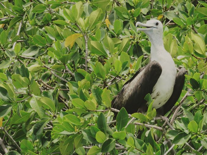 Bird Animals In The Wild Wildlife Plant Green Color Green Outdoors Beauty In Nature Mexico