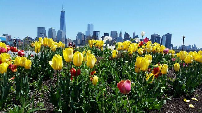 Flowers New York Enjoying The Sights Buildings