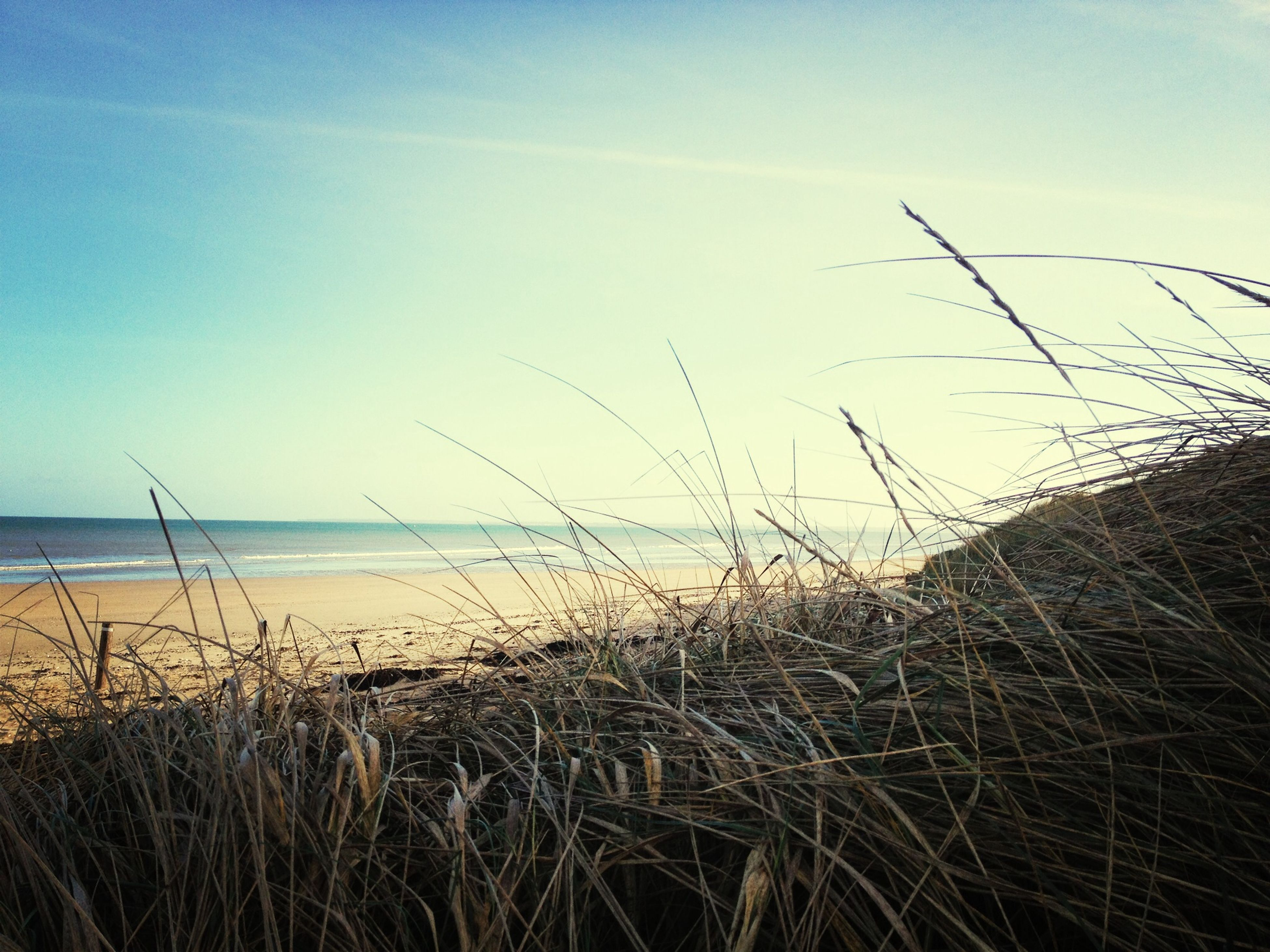 horizon over water, sea, beach, water, tranquility, tranquil scene, sky, scenics, shore, plant, nature, beauty in nature, grass, sand, growth, idyllic, outdoors, remote, growing, day