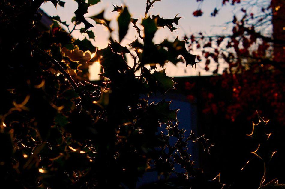 Light Sun Nature Teenagephotographer Switzerland Geneva Contre-jour Suisse  Geneve Soleil