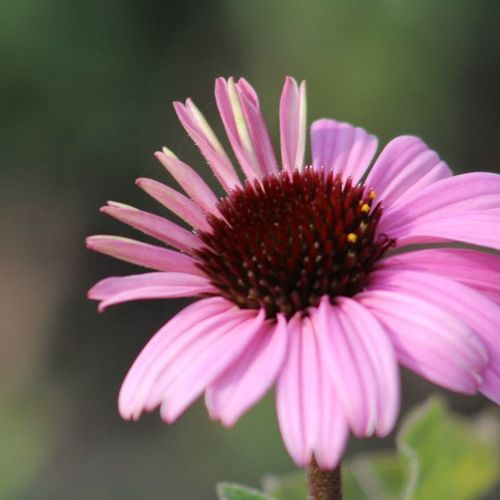 Buffalo outer harbor Flower Head Close-up Outdoors Beauty In Nature Nature Petal