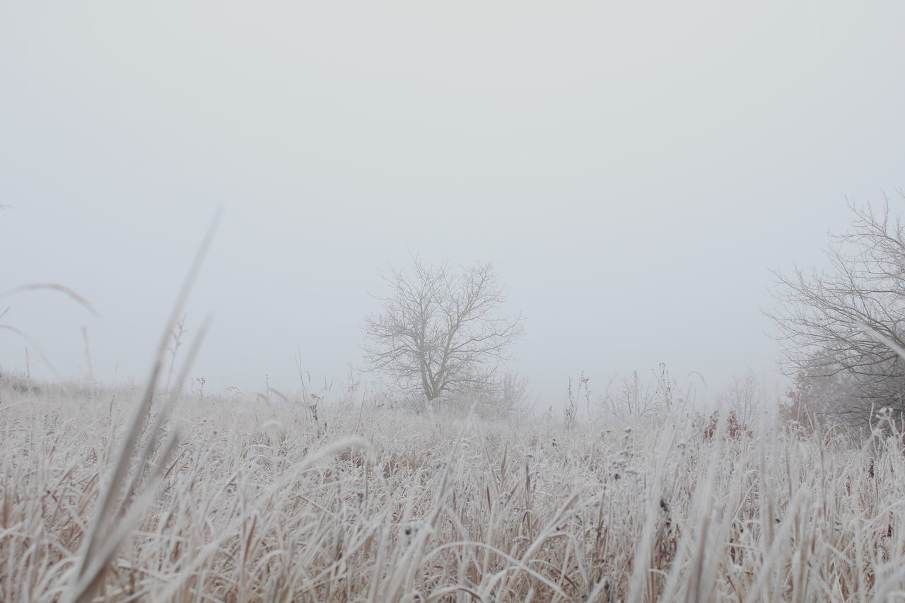 it's cold outside. stay warm #Nature  #nopeople #field #ColdWEATHER  #AllWhite #grass #Winter