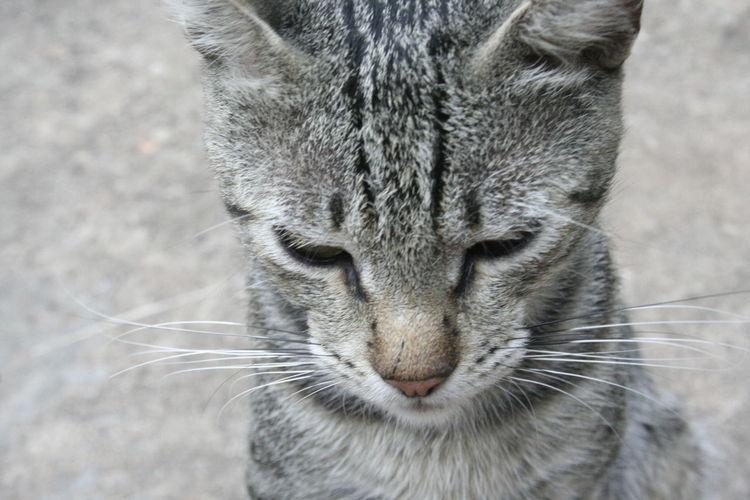#angry #cat #cute #loveanimals #naturalbeauty #naturelife #NoFilter #streetcat #wildanimal #wildnature