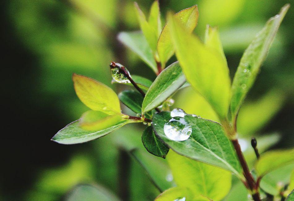 Beautiful stock photos of macro, Beauty In Nature, Close-Up, Day, Drop