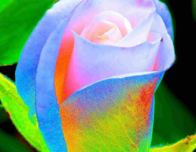 colors colors colors =) 1) Macroclique 2) Ig_affair_weekly 3) Myworld_in_green 4) Small_world_upclose 5) 5star_images 6) Edit_mania__ 7) Sn_apr3 8) Mta_macro 9) Pic_groups 0) Pocket_macro 1) _flowersworld_ 2) Pocket_family 3) Igglobalclubmacro 4) Macro_captures 5) Fotofanatics_alltags_ 6) Ponyfony_flowers 7) Tv_allnature 8) 9vaga_flowerscolor9 9) Tv_flowers 0) Quintaflower 1) Bpa_macro 2) Naturehippys 3) Nature_sultans 4) Tv_colors 5) Rainbow_petals 6) ig_azhubs 7) macro_brilliance 8) 9vaga_macro9 9) fotocatchers 0) resourcemag