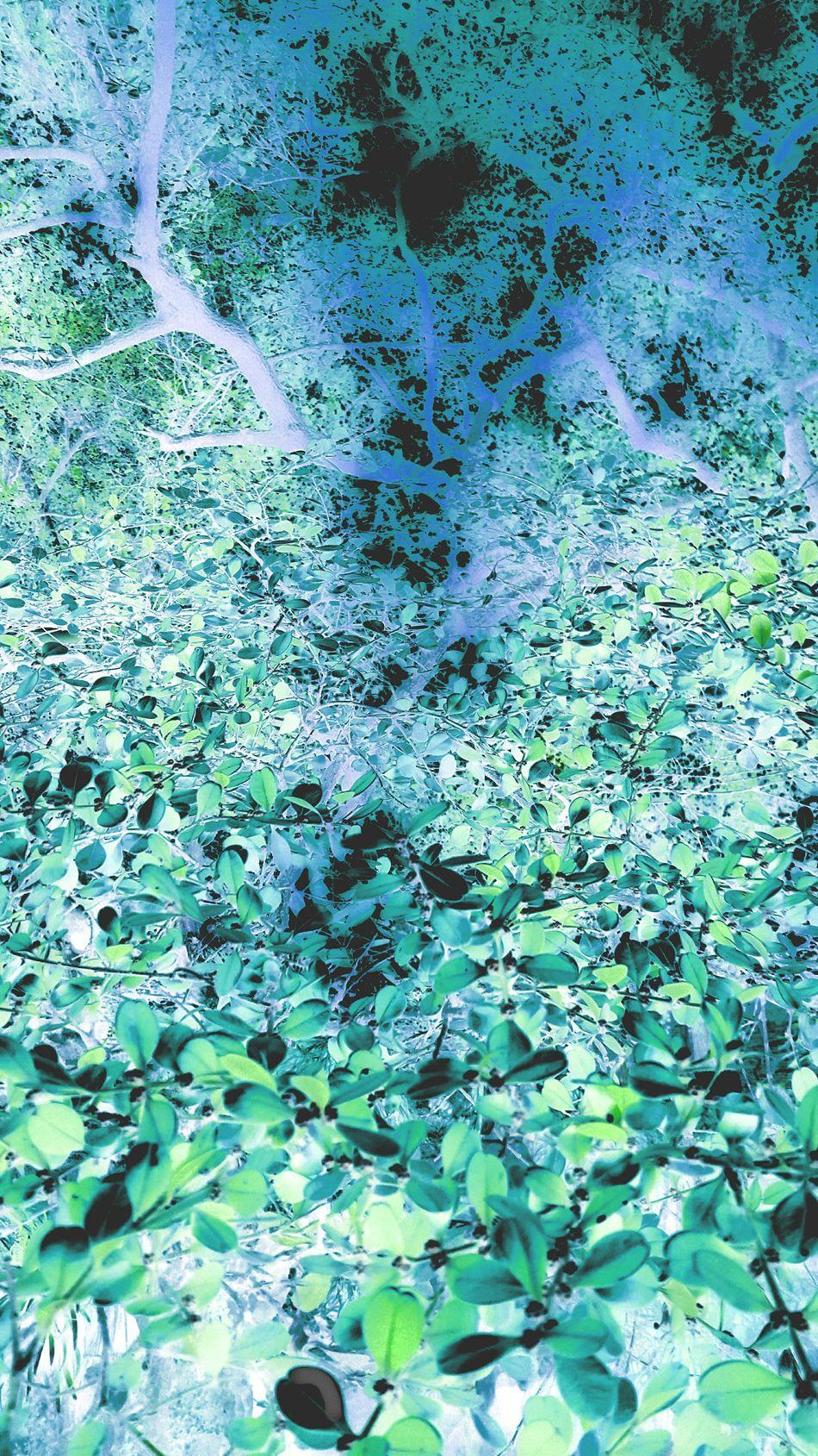 苏州 Hanging Out 富士 Getting Inspired Eye4photography  EyeEm Best Shots Colors Color Explosion Relaxing Taking Photos China Hello World Enjoying Life Trees 风景 EyeEm Best Shots - Nature Leaves