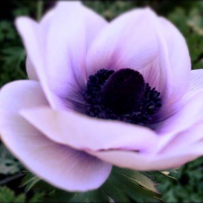 色のある世界 Point Of View Flower