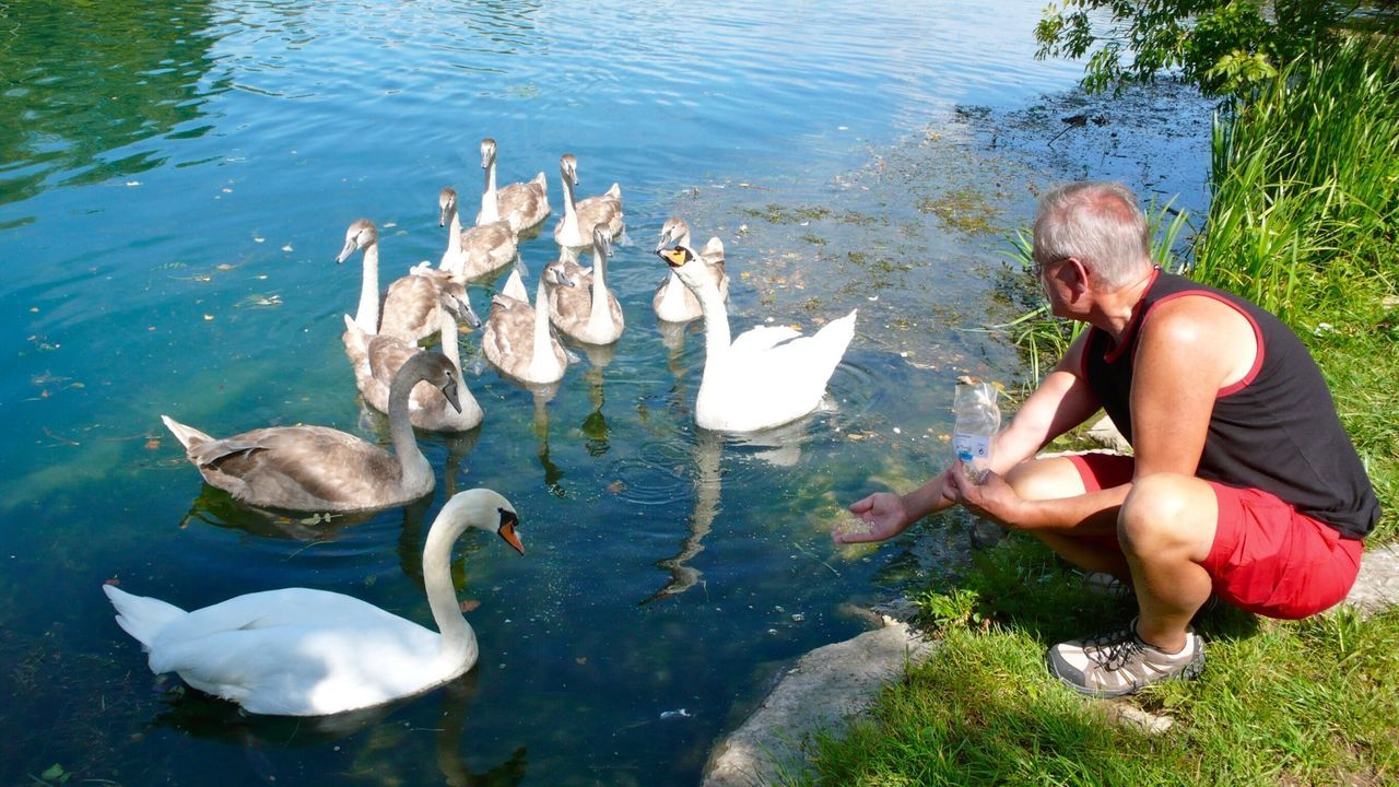 Schwäne Schwanenfamilie Swantastic Swans EyeEm Best Shots - Nature Swan Schwan  Swans ❤ Moment Moments-2015 Eyeem Awards Showcase: February Moments KLIMPI KLIMPERATOR Klimpi-klimperator