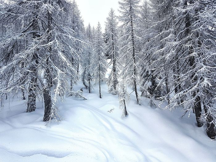 fresh snow Campiglio Neve Winter White Tree Trees Cold Day Eltano86 Enero January 2018 Soft Bianca Inverno Nature Natura Nature Bosco Woods Snow Winter Cold Temperature Nature Outdoors Day Beauty In Nature No People