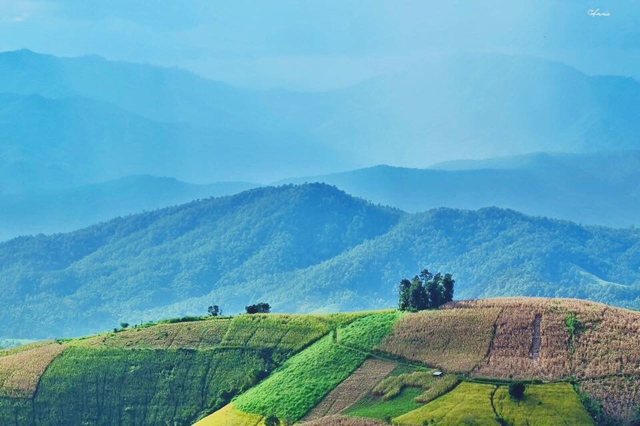 agriculture, landscape, rural scene, nature, farm, scenics, beauty in nature, green color, tranquil scene, field, outdoors, no people, patchwork landscape, day, mountain, tree, sky, grass, terraced field