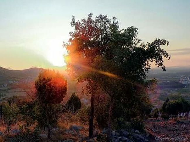 Tree Nature Sunset Growth Outdoors Landscape Beauty In Nature Sky No People Day Nature Fotografia Colour Photography Photography Scenics Travel Destinations Colours Of Life Beauty In Nature Bosnia_Herzegovina Medjugorje Collina Apparizione Religion