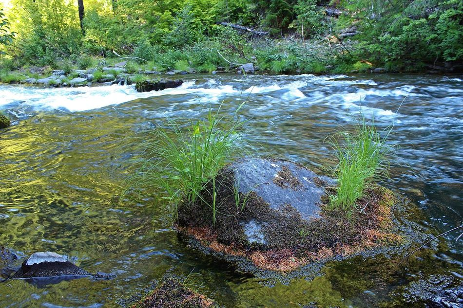 Riverside Moss Water Rock Nature Stream - Flowing Water Scenics Outdoors Flowing Water No People Beauty In Nature Crater Lake National Park Day