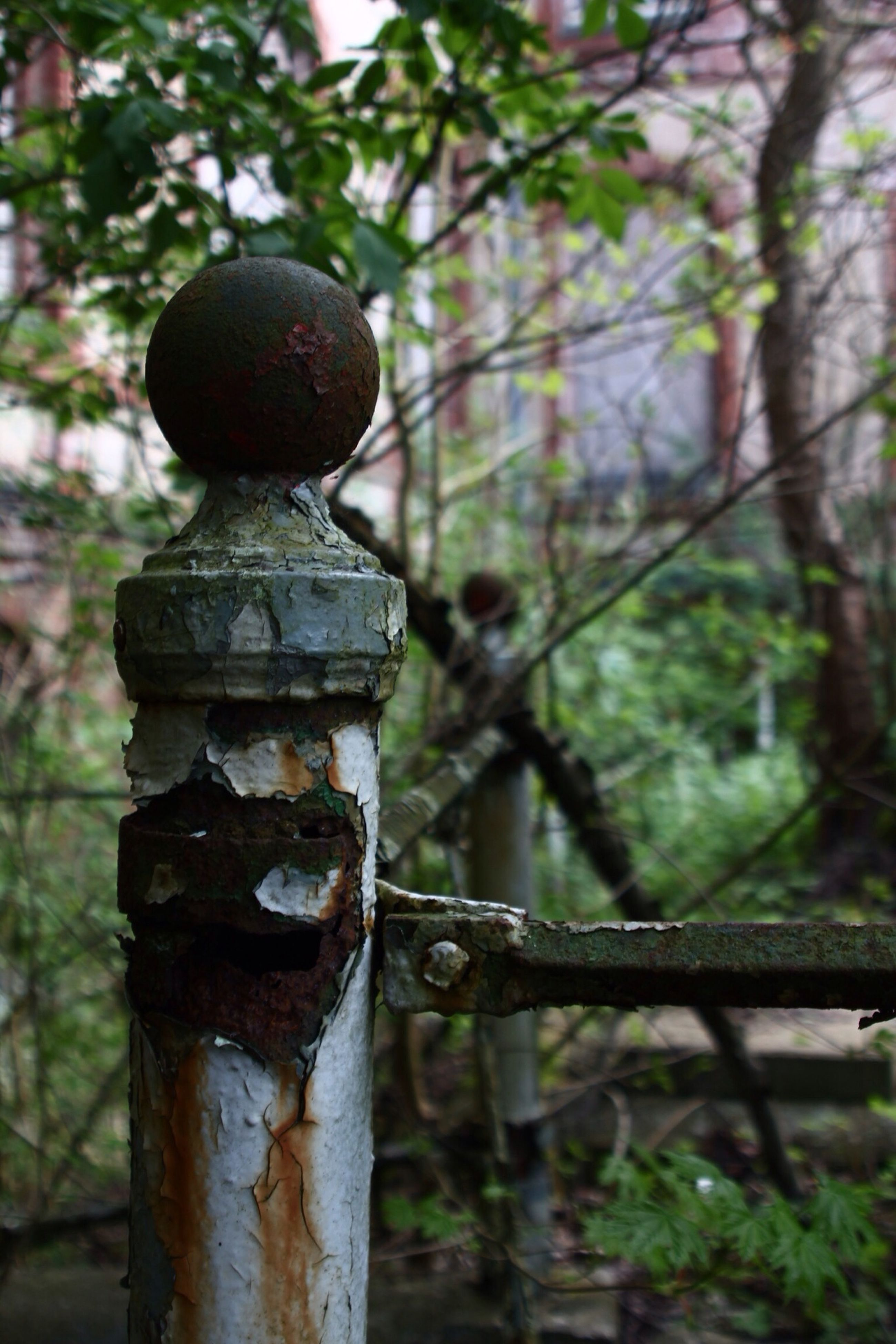 focus on foreground, metal, close-up, rusty, tree, metallic, safety, protection, weathered, hanging, old, security, day, outdoors, padlock, fence, low angle view, selective focus, branch, no people
