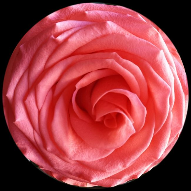 Always stop amd smell the roses! Pink Roses Flowers