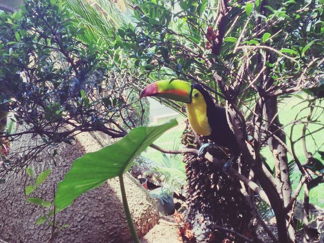 🌿🌲 Tucan Nature Nature_collection Nature Photography Animals In The Wild Bird Bird Photography