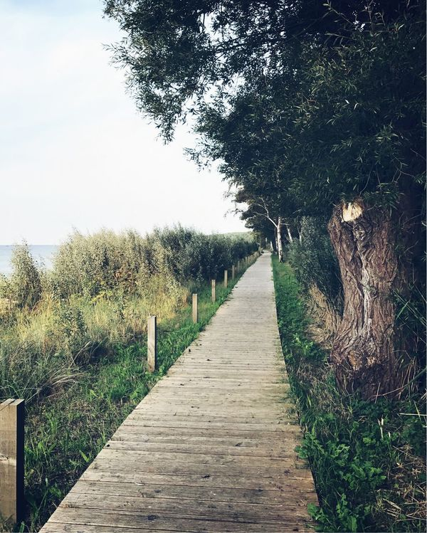 Baltic Sea Tree The Way Forward Nature Footpath Outdoors Growth Tranquility Day Tranquil Scene No People Scenics Landscape Grass Clear Sky Beauty In Nature Sky EyEmNewHere Baltic Path Nature Sea Photography Forest Tree Trunk
