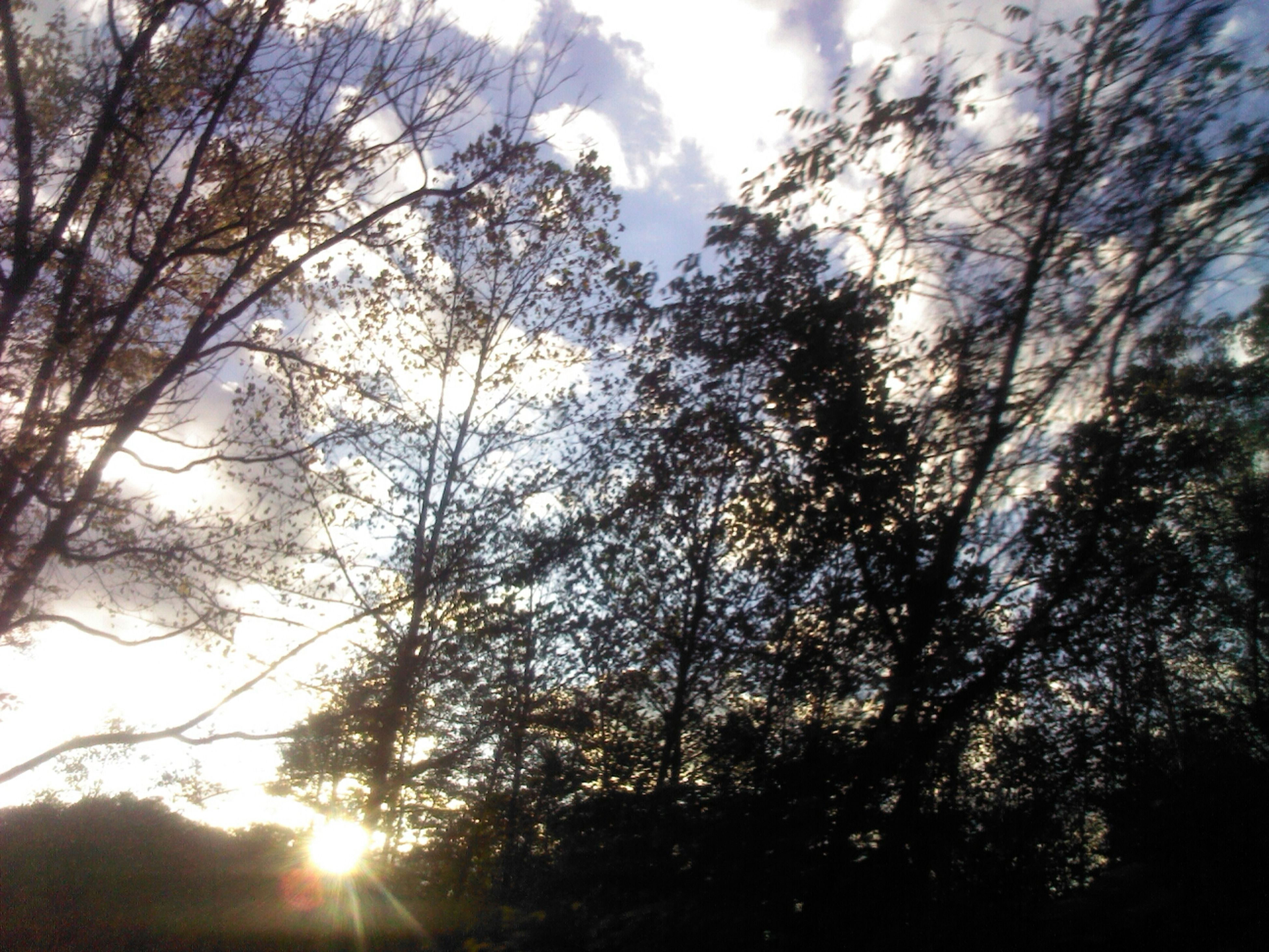 tree, low angle view, sun, tranquility, sunbeam, branch, silhouette, sky, beauty in nature, sunlight, nature, tranquil scene, growth, scenics, lens flare, forest, back lit, sunset, idyllic, outdoors
