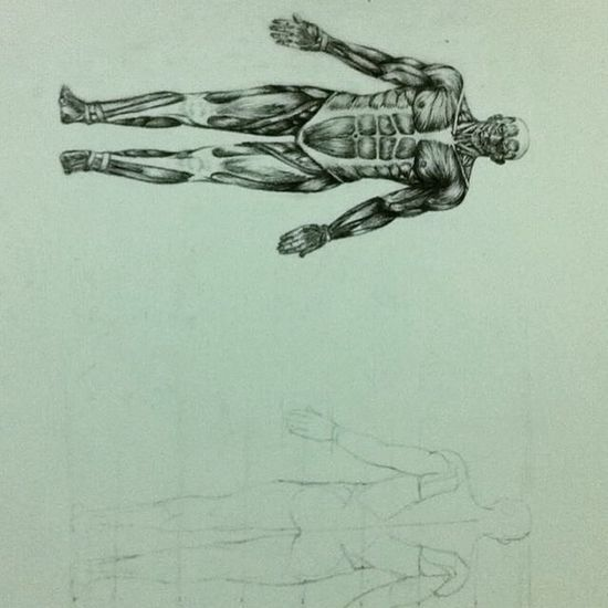 Drawing Check This Out Anatomy 😅😂