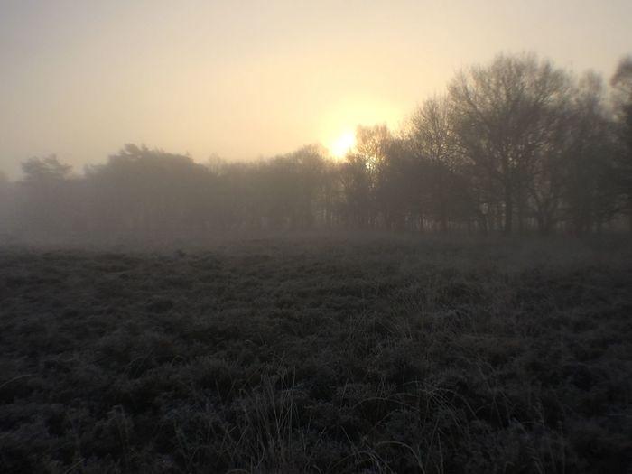 Foggy Morning Nature Walking No Filter