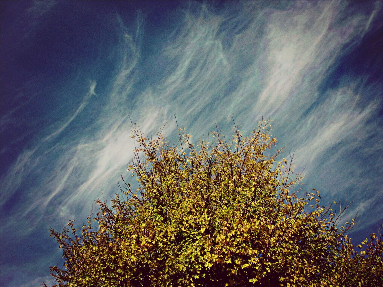 Look Up And Thrive Nature_collection Hanging Out Landscape_Collection