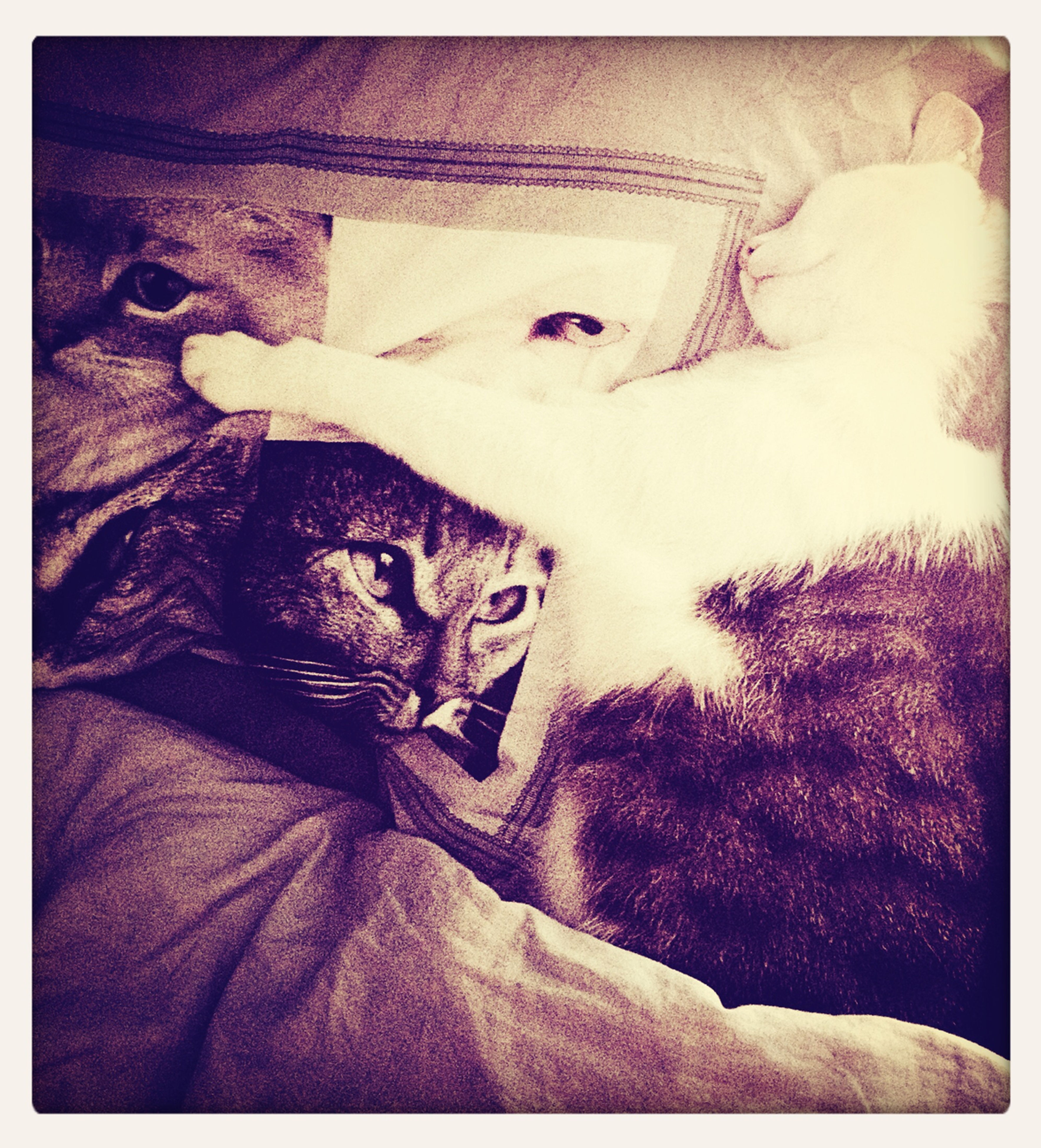 pets, domestic animals, animal themes, one animal, mammal, indoors, domestic cat, transfer print, cat, relaxation, auto post production filter, bed, feline, resting, lying down, home interior, portrait, looking at camera, high angle view, sleeping