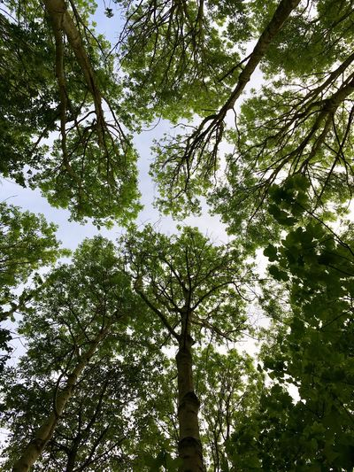 Took this last summer Low Angle View Tree Forest Nature Beauty In Nature Green Color