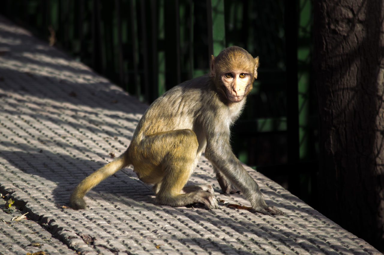 One Animal Animal Monkey Animal Wildlife Ape Mammal Animals In The Wild Outdoors No People Full Length Baboon Day Animal Themes Nature Close-up Monkey
