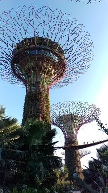 The day i was in there i feel happy Sunset_collection Traveling Travel With Me From My Point Of View Singapore Sky Trees Enjoying Life Trip Photo