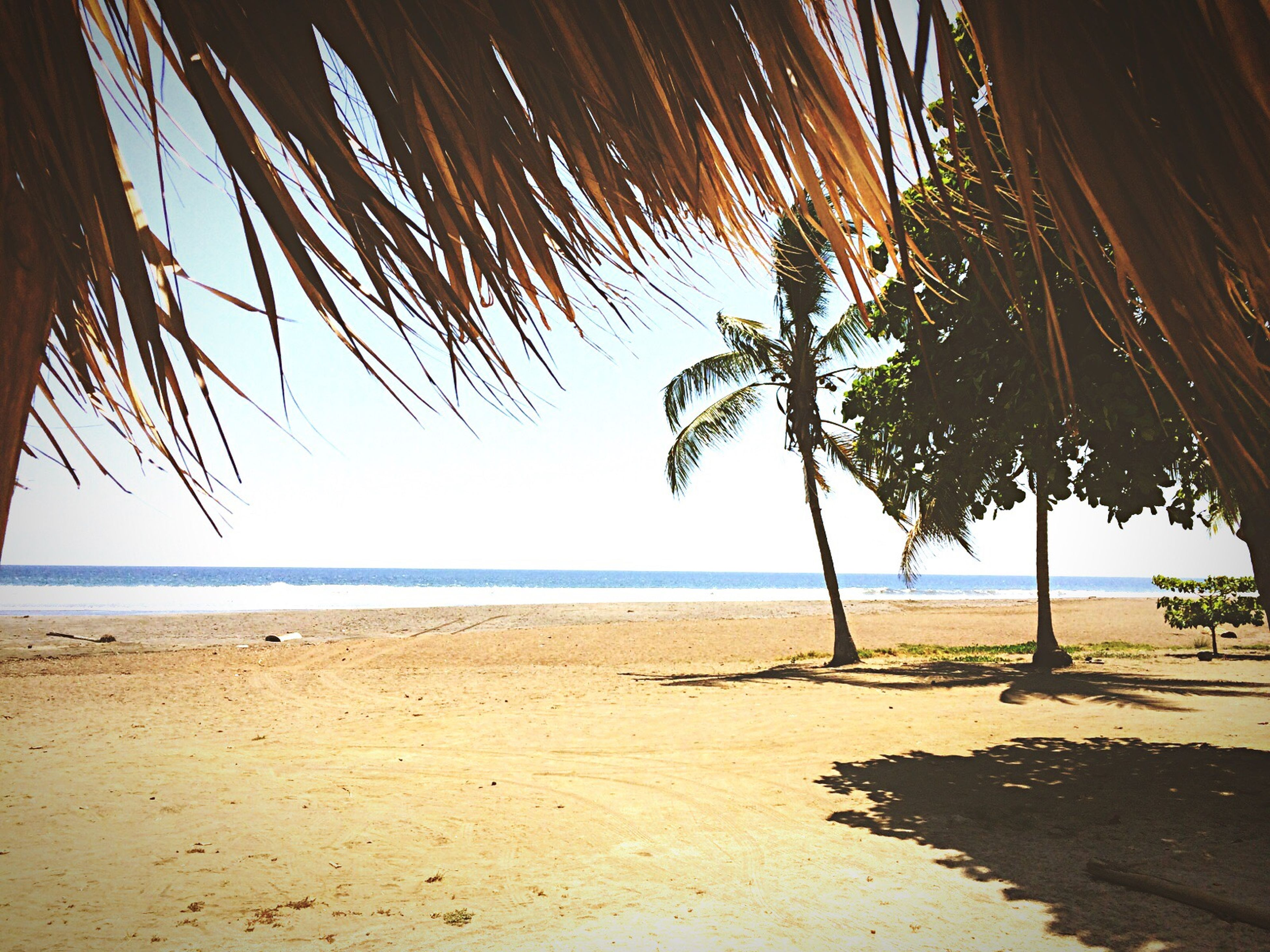 beach, sea, sand, horizon over water, shore, palm tree, tranquility, tranquil scene, water, tree, scenics, beauty in nature, nature, sky, vacations, incidental people, tree trunk, idyllic, clear sky, shadow