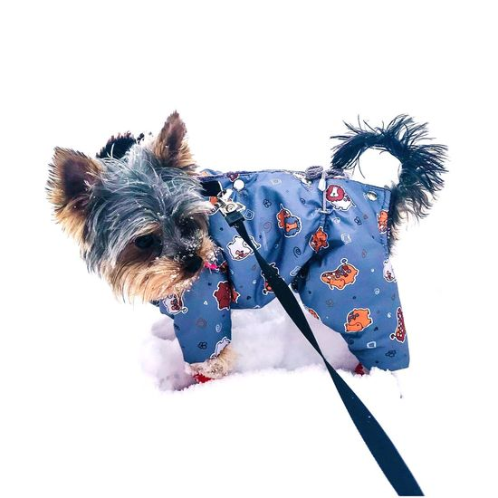 My puppy #snow #winter #puppy Dog Pets One Animal Animal Domestic Animals Animal Themes Mammal No People Day First Eyeem Photo