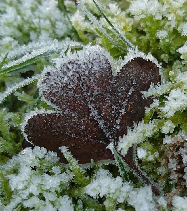 Nature Day No People Growth Outdoors Plant Beauty In Nature Tree Close-up Animal Themes Frost Crystals Frozen Beauty In Nature Frost Pattern Frosty Leaves Grass Leaf Frozen Water Cold Temperature Snowing