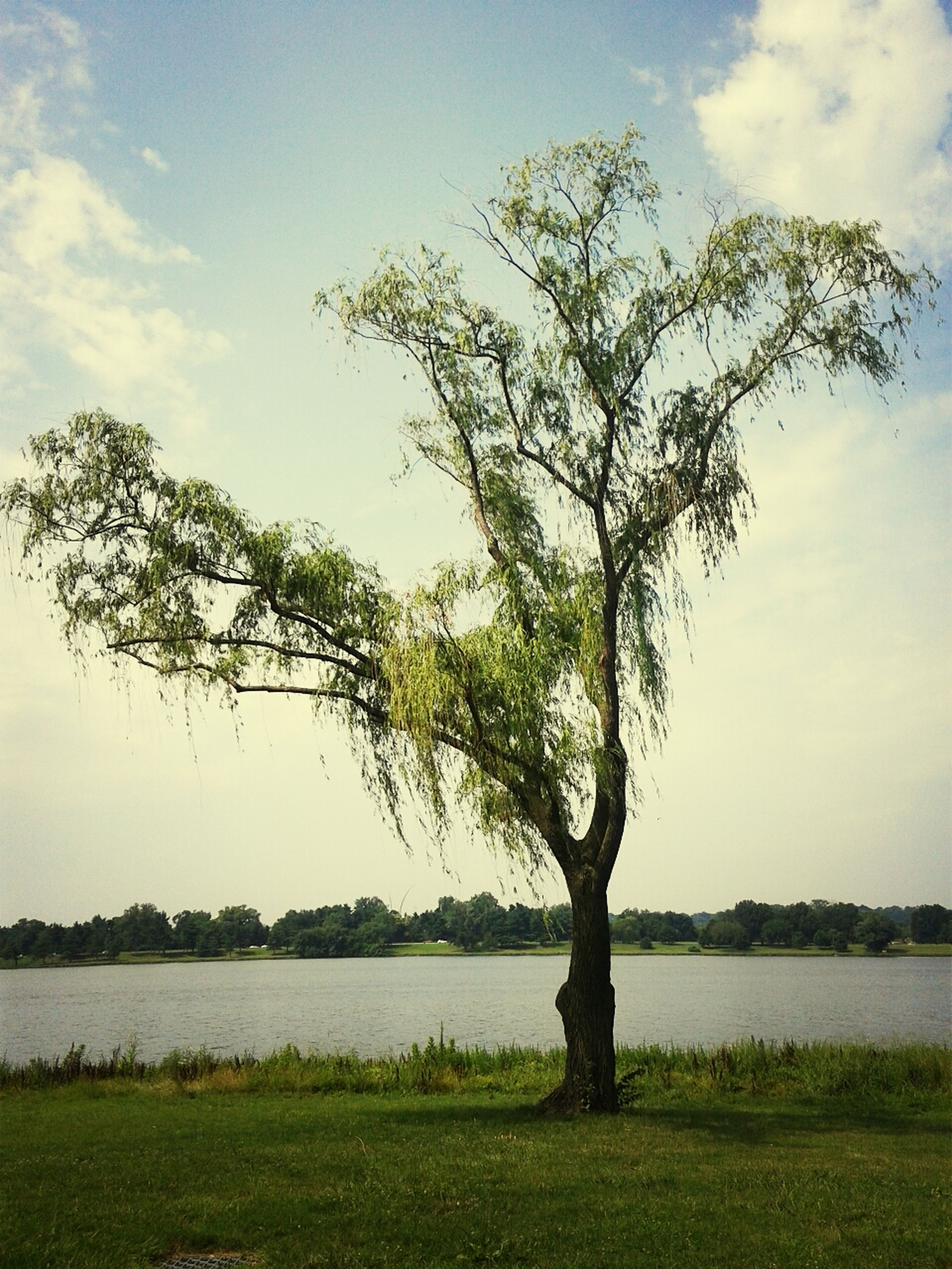 grass, tree, tranquility, tranquil scene, sky, scenics, beauty in nature, nature, water, landscape, field, bare tree, branch, lake, tree trunk, grassy, growth, green color, single tree, idyllic