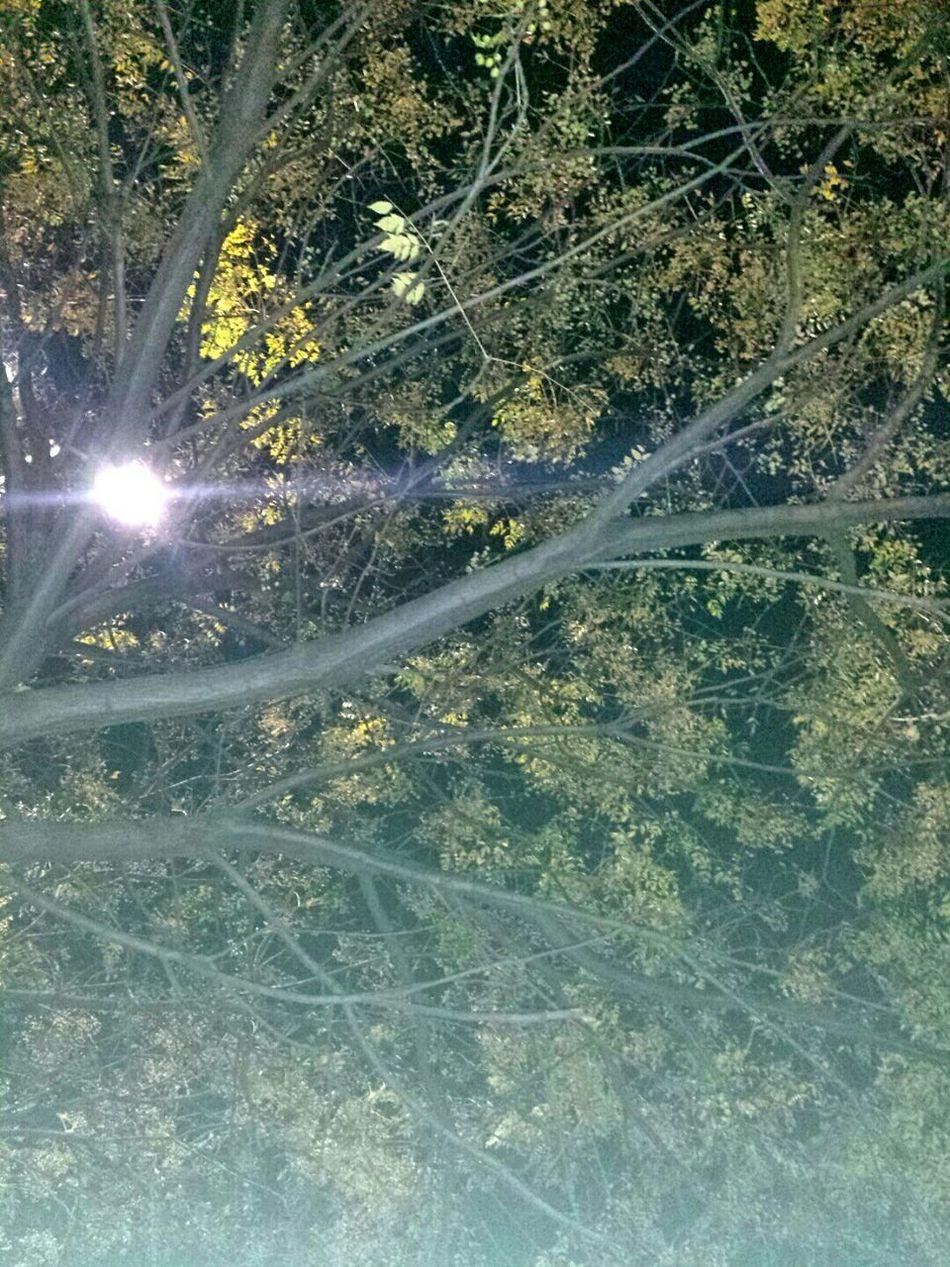 Three Light