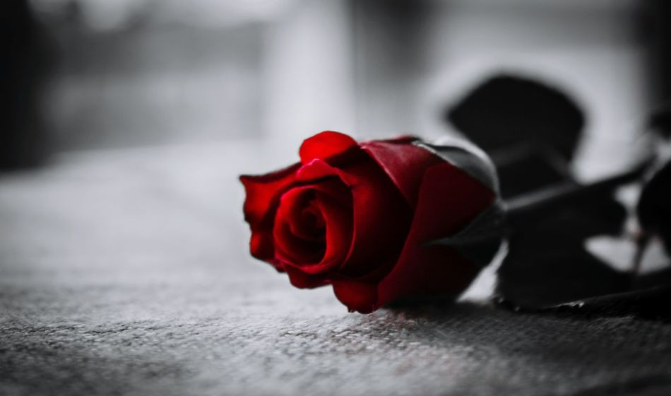 Rosé Red Black And White Photography Black And Red Love Lano Qamişlo