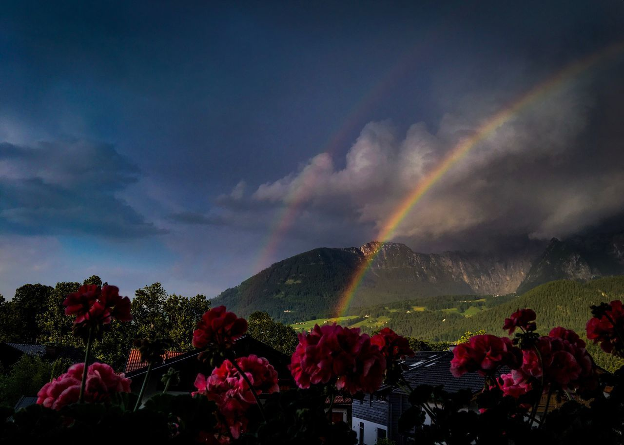 Beauty In Nature Flower Nature Sky Cloud - Sky Mountain Scenics Tranquility No People Outdoors Landscape Growth Day Fragility Regenbogen Mountain View Berchtesgadener Land  Schönau Am Königsee Iphonephotography Lightroom Mobile