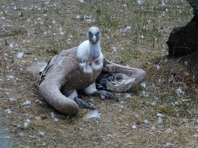 Animal Animal Themes Bird Outdoors Wildlife Zoology