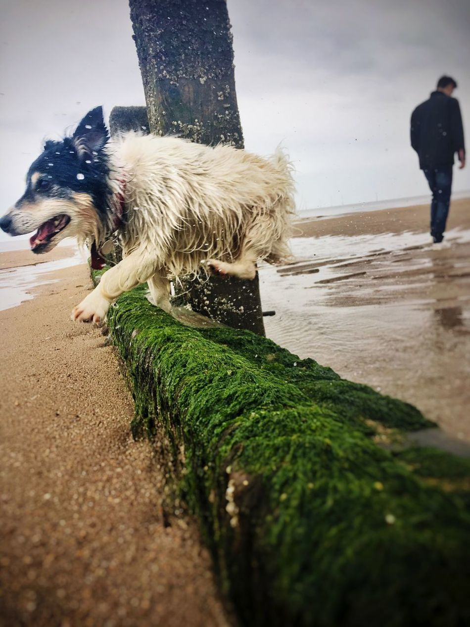 Jump !! Dog Pets Outdoors Beach Nature Sea Sky Shutter Speed Cute Day Out Fun Funny Jumping Happy :) Rhi-Rhi's Photography Photo Photography