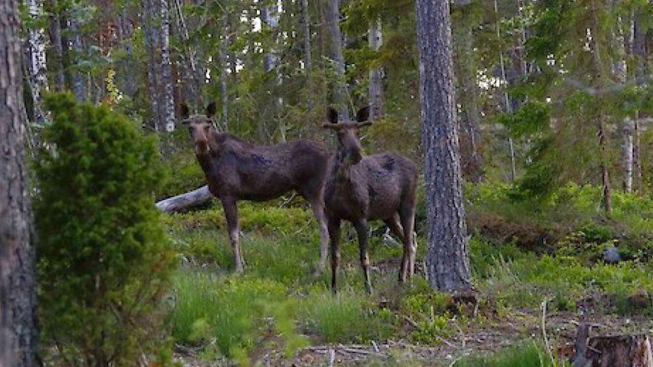 Elks Stockholm, Sweden