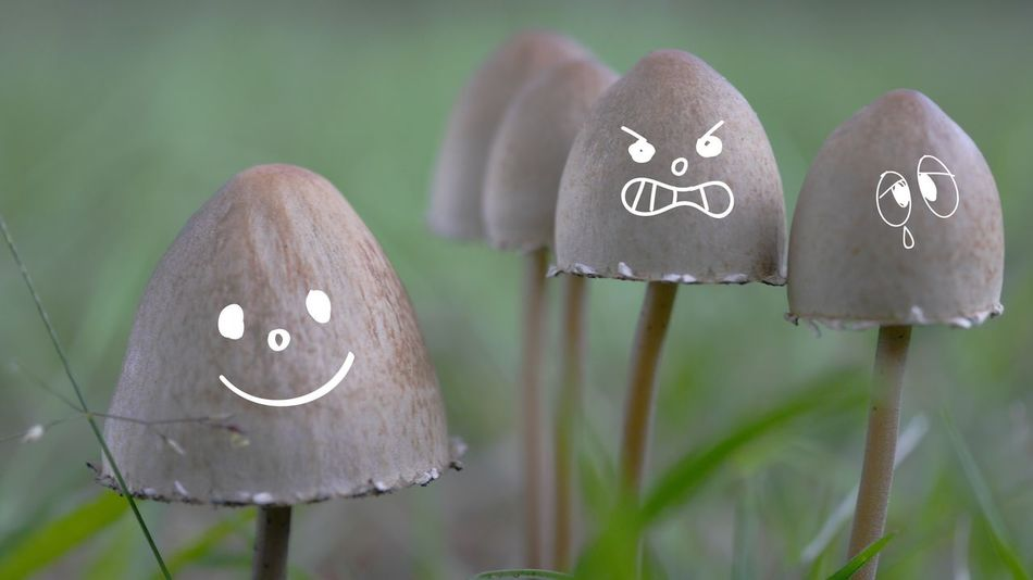 Just for fun 😄 Mushrooms 🍄🍄 Edited My Way EyeEm Best Edits EyeEm Best Shots Funny Faces Funtimes Mushrooms Smile :) Funny Edits Just Smile