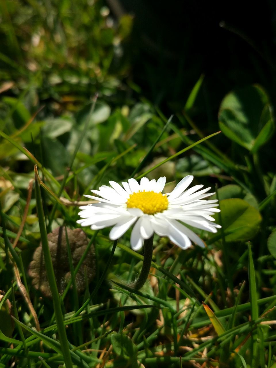 flower, petal, white color, nature, growth, beauty in nature, flower head, fragility, freshness, blooming, high angle view, plant, close-up, day, green color, outdoors, no people, leaf