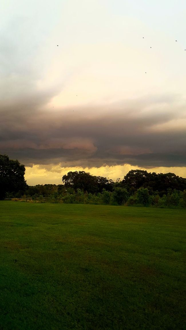 Florida Life Bad Weather Storm Clouds At Sunset Storm Clouds Wild Sky Colors Storm Clouds Are Brewing Storm Clouds Off To The Distance Stormy Skies Clouds Rainy Day Rain Gall Stormy Clouds Stormy Sky Stormclouds Stormy Weather Storm Approaching Storm Clouds Gathering Dusk Storm Clouds 43 Golden Moments Florida Storms Florida Storm Storm Cloud Florida Sunset