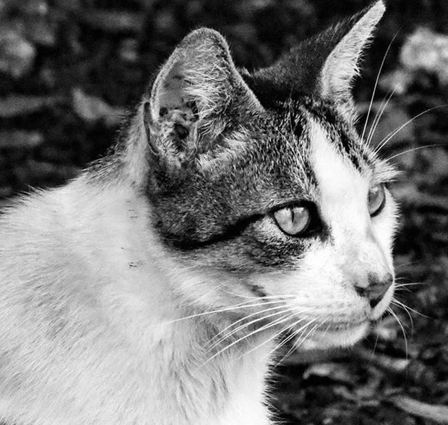Stray Fiunaturepreserve FIU Cat Blackandwhite Catsofinstagram