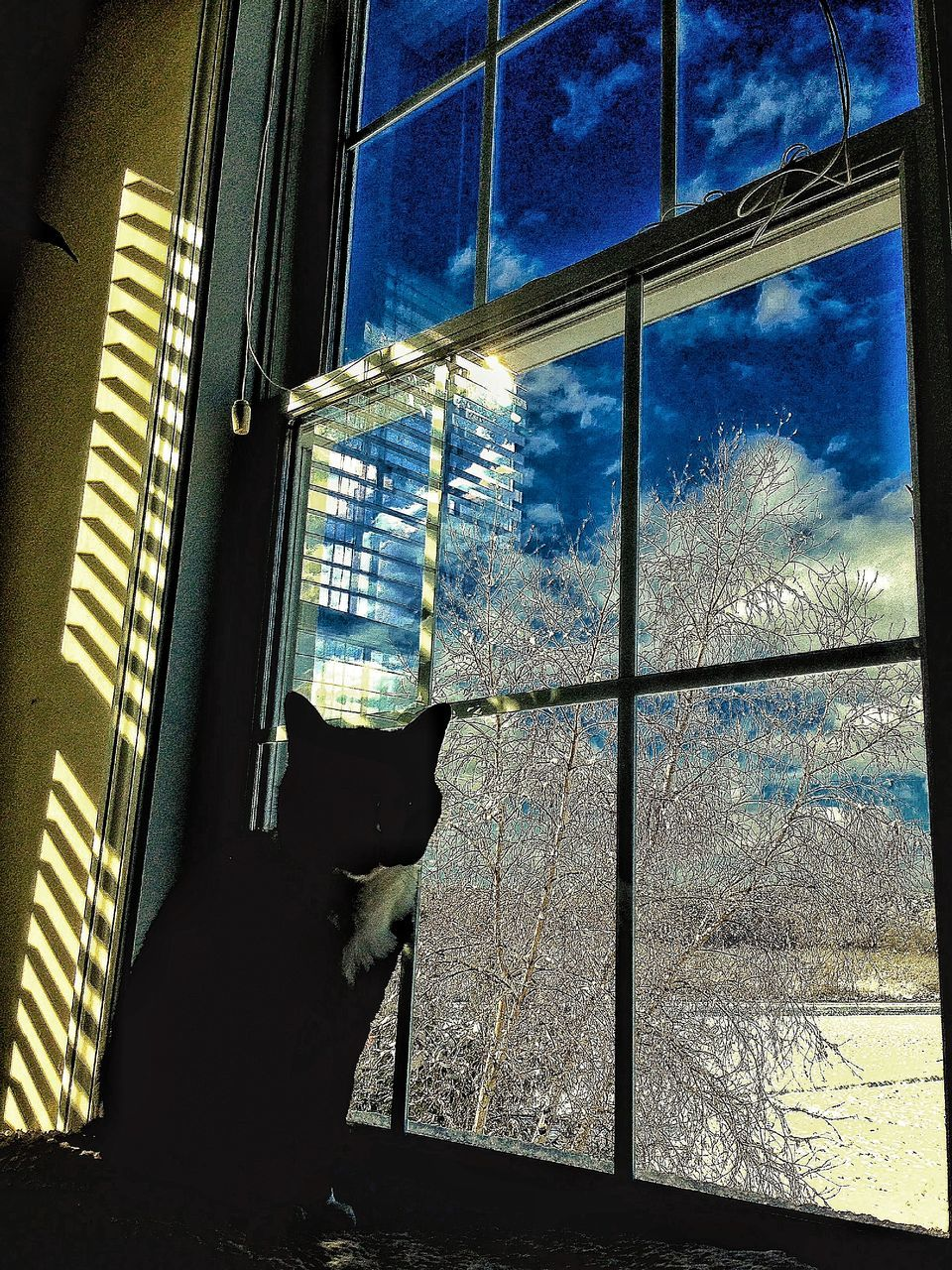 window, one animal, animal themes, domestic cat, domestic animals, pets, mammal, looking through window, no people, feline, cold temperature, winter, indoors, day, built structure, architecture, snow, sitting, nature, sky