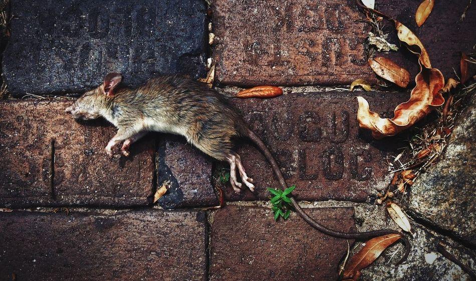 #peaceful #rest. Streetphotography Nature The Street Photographer - 2014 EyeEm Awards Floortraits